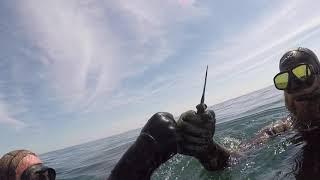 Gambar cover East Coast Diving