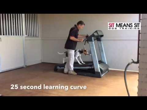 How to teach a dog to go on a treadmill