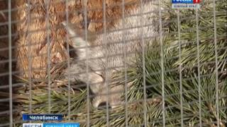 Животные-инвалиды обживаются в челябинском приюте