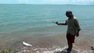 Little Barramundi at Blue Mud Bay, Arnhem Land