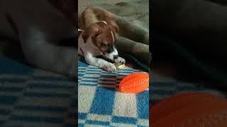Детская соска и маленький щенок