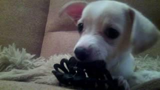 Это моя собака !)