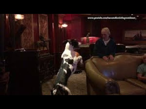 Great Dane dances along to Edison Gramophone