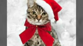 Картинки Кошек И Котят под музыку Mi Gente