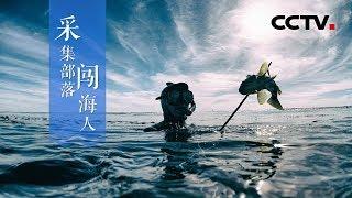 《采集部落闯海人》深海游猎故事   CCTV纪录