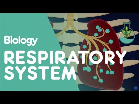 Respiratory System - Introduction   Biology for All   FuseSchool