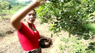 Survival skills: Find insects on tree & fried on clay for food - Cooking insects eating delicious