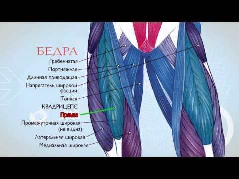 Анатомия бодибилдинга с Алексеем Лесуковым