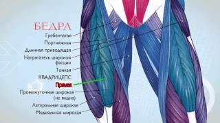 видео биомеханика мышц человека бодибилдинг