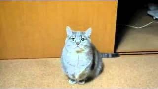 Bu kedi ne anlatmaya çalışıyor