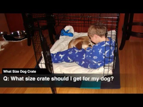 What Size Bed Should I Get what size dog crate - youtube