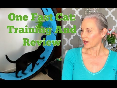 One Fast Cat: Training And Review