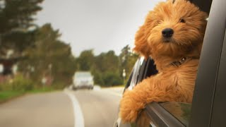 6 Tips That Will Make Traveling With Your Dog So Much Easier