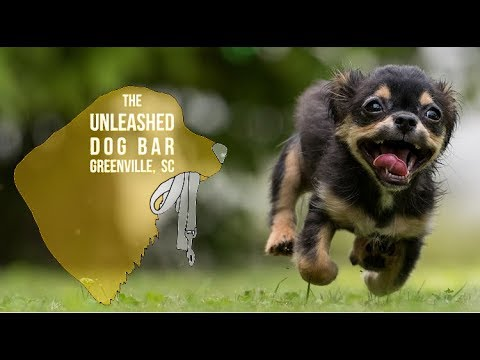 The Unleashed Bar - Greenville's First Dog-Focused Bar