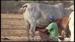 Economie: Le commerce de bétail au cœur d'une rencontre inter Etat