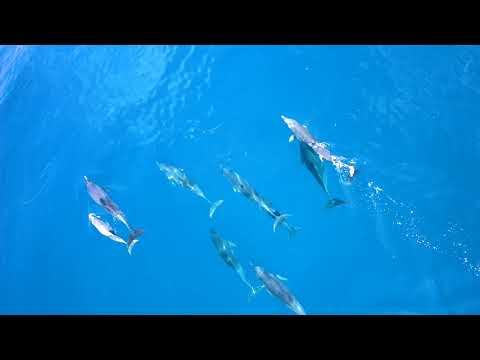 Exploring the Great Barrier Reef with Splashdrone 3