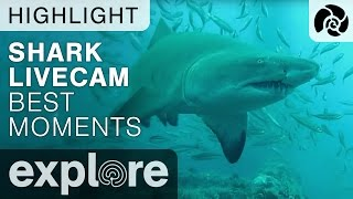 Cape Fear Shark Live Cam Best Moments Compilation - Live Cam Highlight