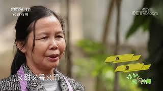 《谁知盘中餐》 20200730 古法加新招 养出致富鱼|CCTV农业 - YouTube