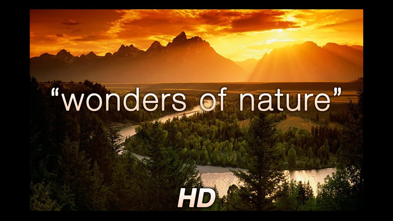 Wonders Of Nature 1 Hr Amazing Nature Hd Relaxation Video 1080p