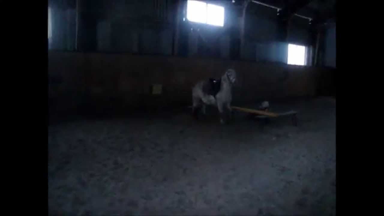 Horse Bloopers-Fails