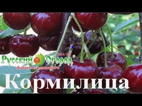Русский огород Отзывы \Посылка с саженцами № 3