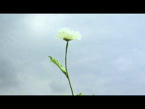 花とラルバ (浅野陽子) / Live or Let Live (Yoko Asano)