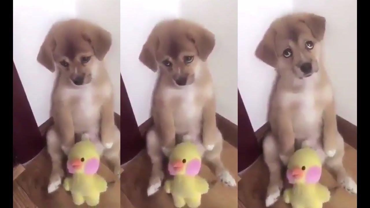 Al Castigado Quitaron Reacción De La Un Perrito Tierna A Su Ser Pollito ¡le Pwk8Xn0O