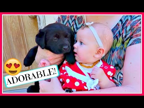 ADORABLE BABY & PUPPY FATHER'S DAY FUN! (DAY 876)