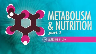 Crash Course: Anatomy & Physiology: All About Nutrients thumbnail
