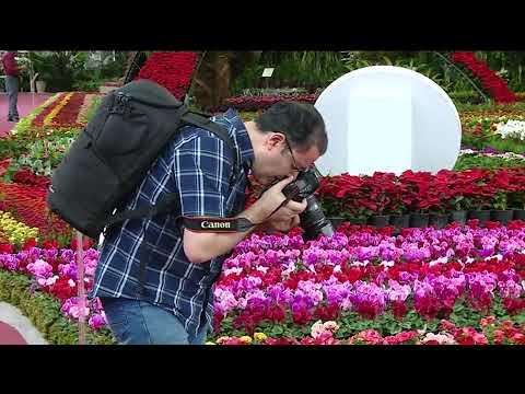 The 17th Tehran International Flora Exhibition 2019