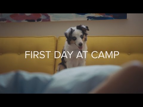 Dear Diary: First Day of Doggie Day Camp