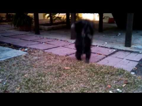 World's Most Funny Dog Video To Date!