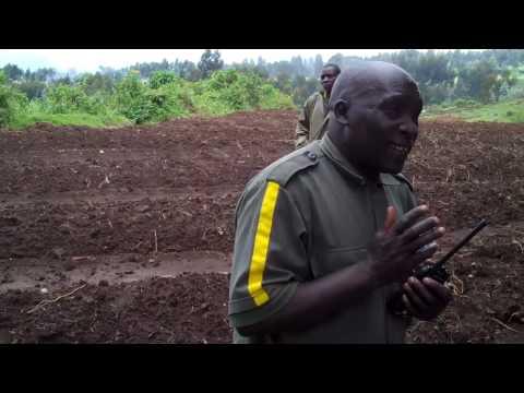 Interview with Francois, GorillaTracker in Rwanda with Dian Fossey