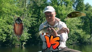 БАТЛ хрущ против искусственных приманок Кто кого Сплавная рыбалка по Пслу на голавля