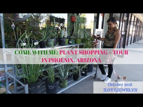 Come with me: Plant shopping + tour  | Phoenix, Arizona | October  2018 | ILOVEJEWELYN