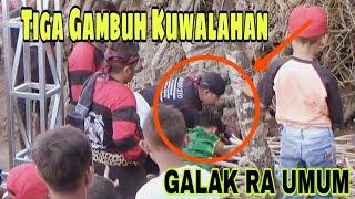 Gambar cover ANGKERNYA CELENG KAWAK GARUDO SETO!! Kesurupan LARI Ke Pohon Bambu