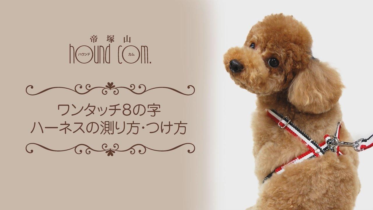 付け方 ハーネス 犬用ハーネスの付け方を解説!ハーネスの種類や商品15選