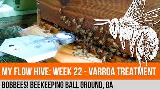 My Flow Hive: Week 22 - Varroa Mite Treatment