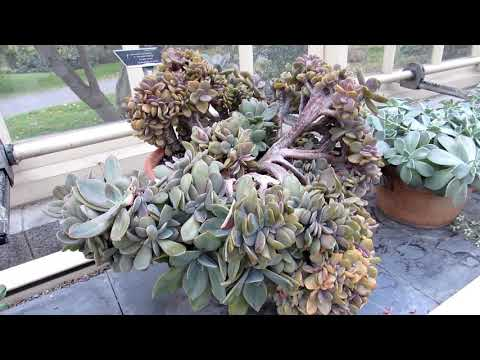 The Cacti & Succulent Plant Collection at Dublin Botanic Gar