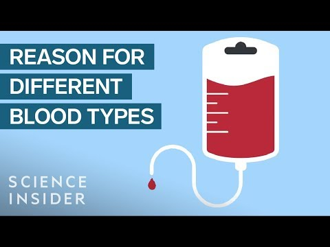 Why You Can't Mix Blood Types
