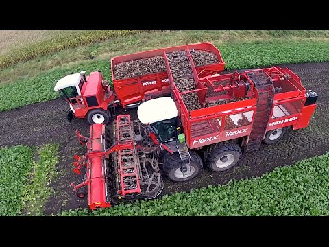 12 row Sugarbeet harvesting | Rovers Boekel l Holmer / Agrifac Hexx Traxx 12 | Gilles overlaadwagen