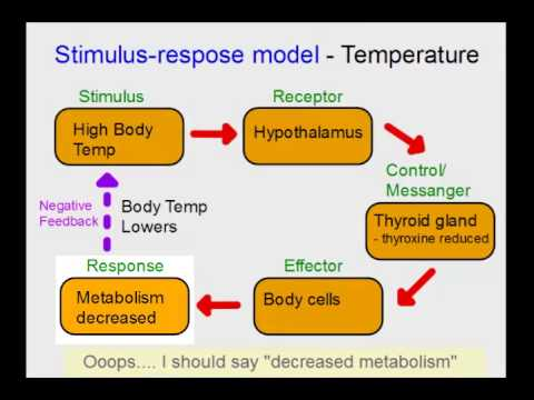 homeostasis review A cell membranes help organisms maintain homeostasis by controlling what substances may enter or leave cells b some substances can cross the cell membrane without any input of energy by.