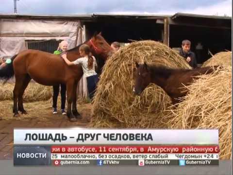 Беременную лошадь били лопатой. Новости. GuberniaTV.