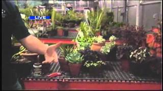 Keep your plants alive with indoor growing tips