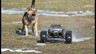 Dog vs Rc cars
