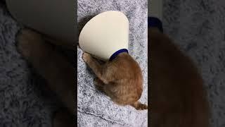 メガホンみたいな子猫😭