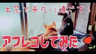 【犬と猫】とある日の平凡な会話・・・。アフレコ