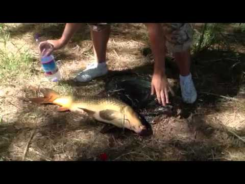Crap 8.5kg riul tajo toledo,,carpa rio tajo toledo 8.5 kg,, Travel Video