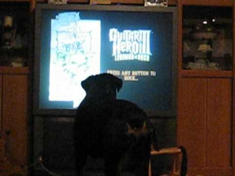 Kilo keeping an eye on TV
