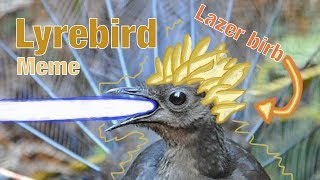 Credit: - Lyrebird video: https://www.youtube.com/watch?v=WA0tP-p7m...